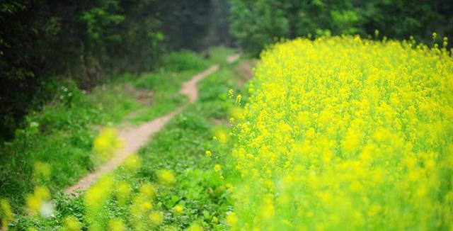 Mê mẩn với những cánh đồng hoa mùa thu tại miền Bắc